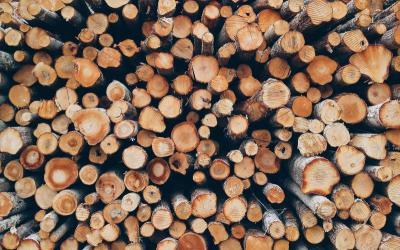 Can Wood be Recycled?
